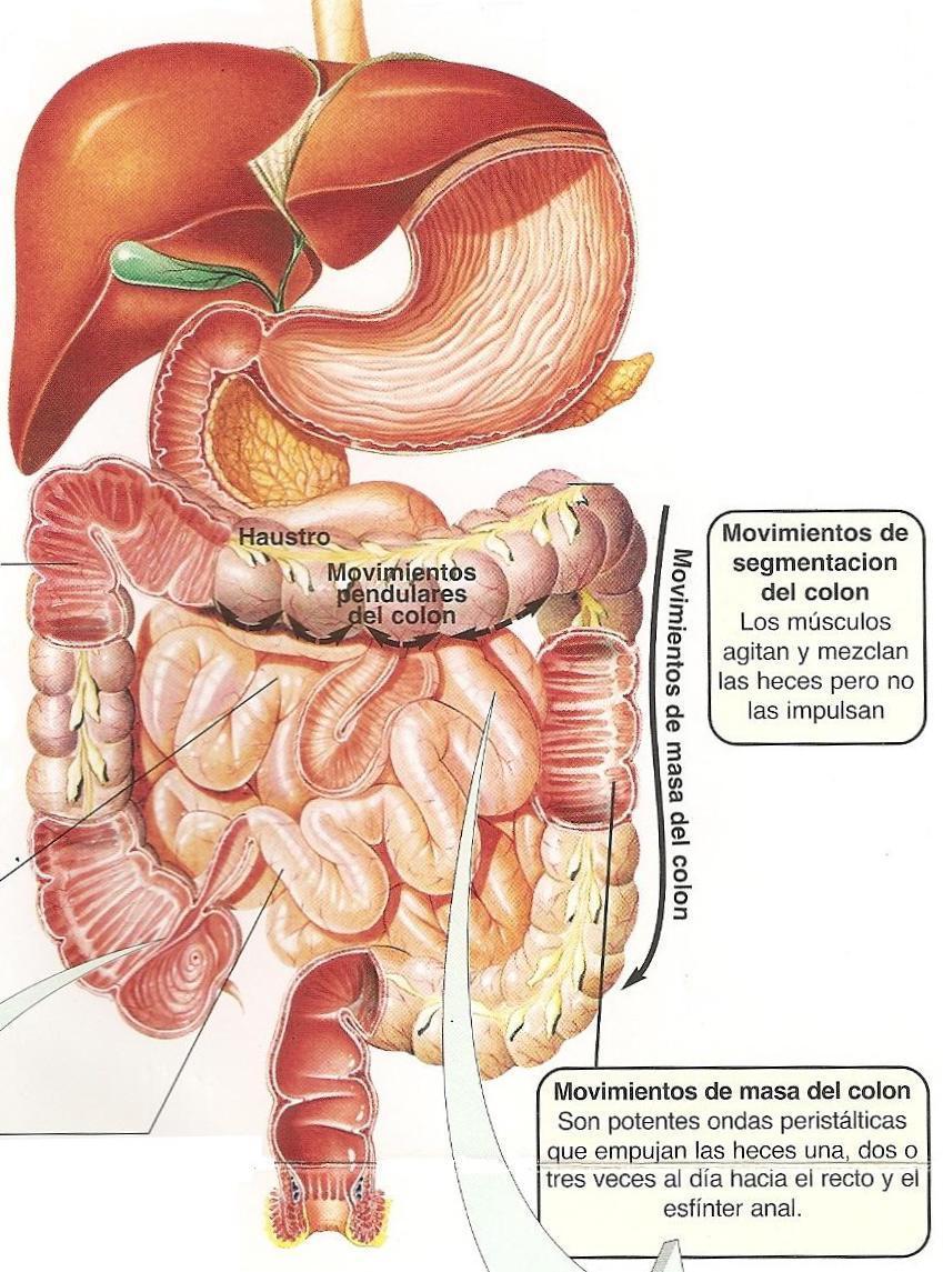 Identificando el síndrome de colon irritable