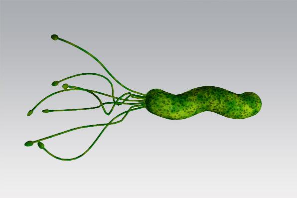 ¿Qué sabemos de Helicobacter?
