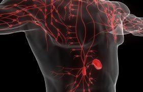 La funciones depurativas de la linfa | Grupo Gamma