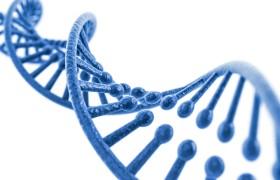 Estudios de ADN: Diferencias entre un estudio anónimo y uno con validez legal.
