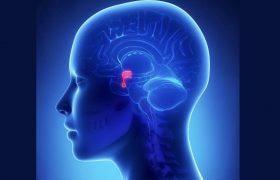 Patología Hipofisaria Compleja | Evento Médico | Grupo Gamma