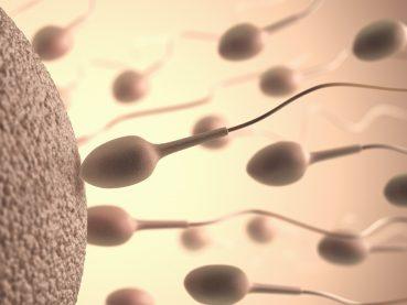 Espermograma: La automatización en la andrología clínica | Grupo Gamma