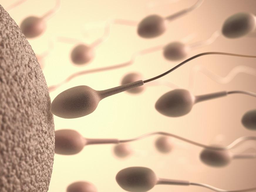 Espermograma: La automatización en la andrología clínica
