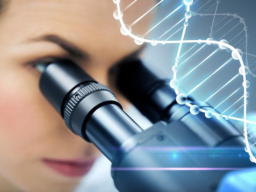 Fragmentación de ADN, Columnas de Anexinas